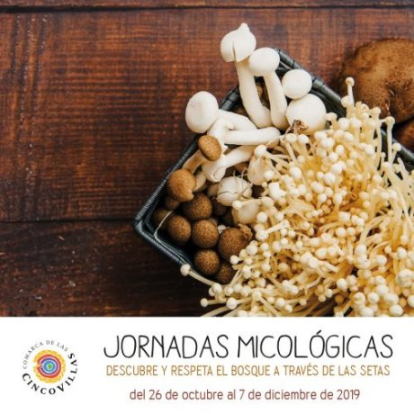 jornadas micologicas cinco villas